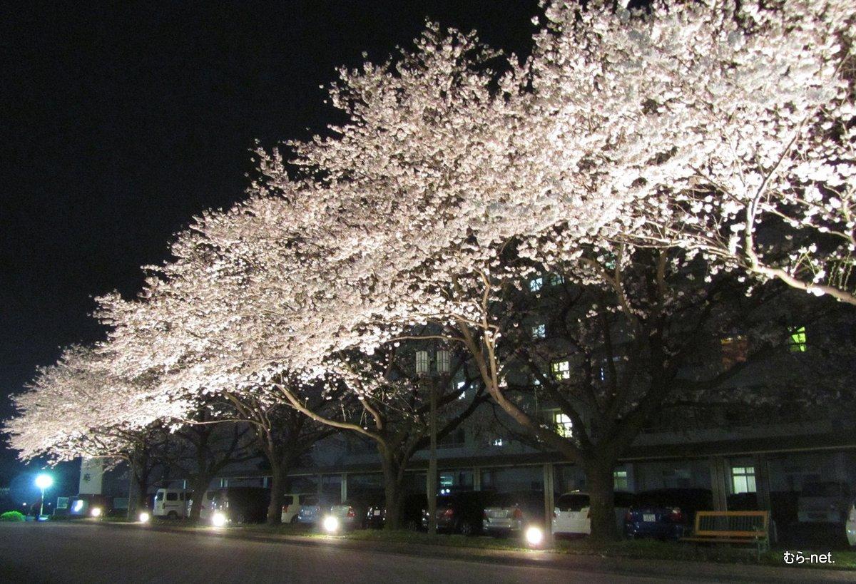 桜ライトアップ【豊里】