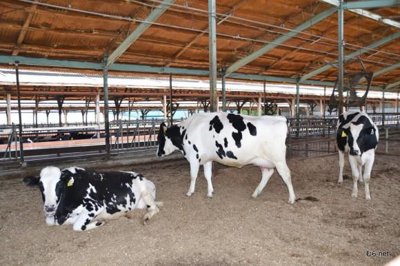 12-乳牛部 2013-05-17 10-44-28