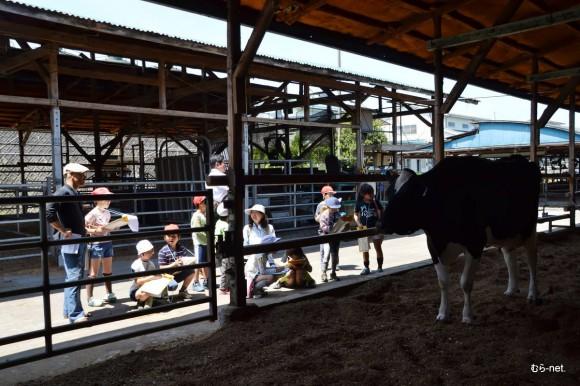 11-乳牛部 2013-05-17 10-42-52
