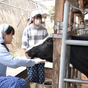 07-乳牛部 2013-03-29 9-11-49
