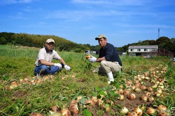 5-玉ねぎ収穫 2013-05-23 15-00-55