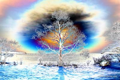 風蓮湖のデジタルアート