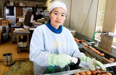 養鶏部で作業中の土井麻美さん