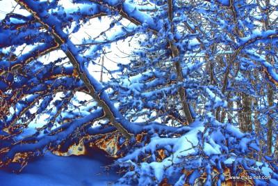 雪のデジタルアート