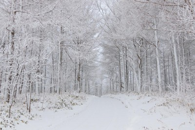 雪の防風林