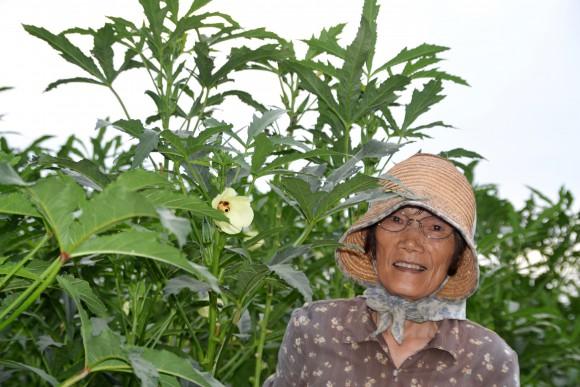 下元啓子(77)オクラ収穫。花もいいね。