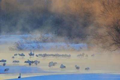 鶴居村の雪裡川