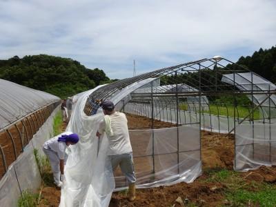 成田実顕地で、ビニールハウスのビニール張りをやりました。