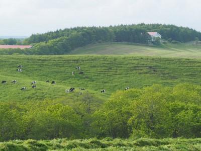 牧草地から生活館を望む