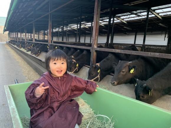 母が仔牛に乾燥草をやる作業を愛娘は草台車から見守る。