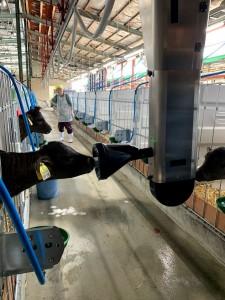 これが動く自動哺乳機カーフレールです