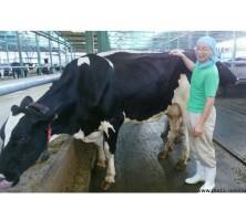 新しい酪農部のメンバー