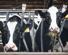 ある日の乳牛部 「仕事って面白い、職場っていいな~」
