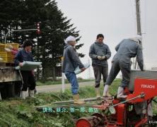2011ジャガイモ定植その2 【夕張】
