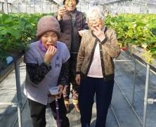 春日山の老蘇さん、豊里いちご園へ