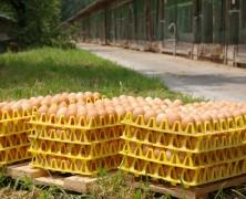 一つの卵を活かす 一つの卵に託す