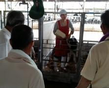 飼料稲生産農家の参観