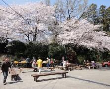桜の木の下で【岡部】