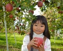飯田へりんご狩りに