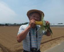 トウモロコシ収穫ツア-月間始まる!【岡部】