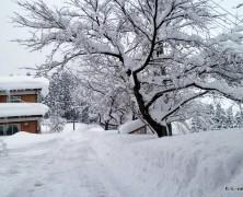 大雪です【雄物川】