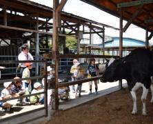 高野尾小学校の子達が乳牛部探検【豊里】