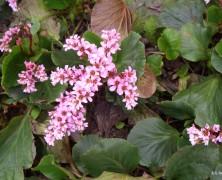 待ってたよ。春がやっと。一気にだ。【雄物川】