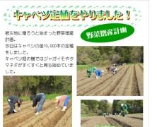 キャベツ定植〜野菜増産計画〜【豊里】