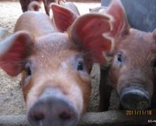 全国の養豚メンバーが集合!