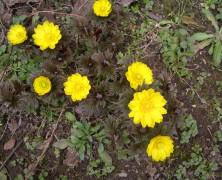 春一番 【雄物川】