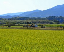 今年のわら収穫【豊里】