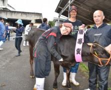 松阪仔牛市場で豊里の牛貢献
