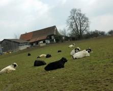 スイスにも春が来たよ♫