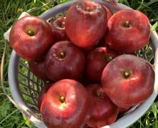 飯田へりんご収穫へ行ってきました🍎