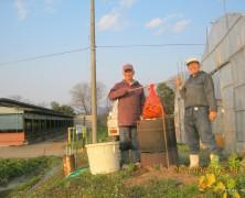 さつまいもの種芋植え【春日山】