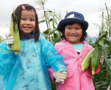 とうもろこし収穫体験in美里実顕地