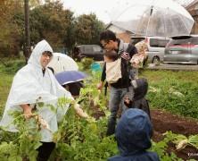 雨ならあめでやっぱり畑【北条】