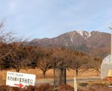 稲越さんの桜