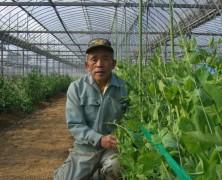 中尾農場の玉葱とスナップエンドウ