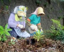 照葉樹の植樹 その2【豊里】