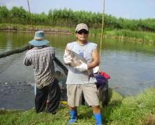 魚収穫【タイ】